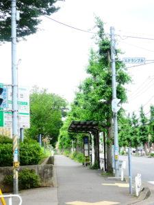 団地中央バス停と銀杏並木
