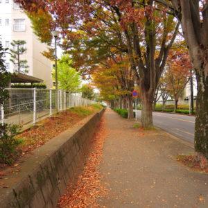 秋の欅並木