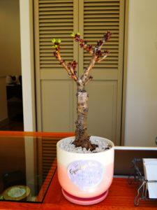 プライベートサロンの彩り 桜